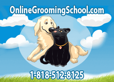pet and dog grooming school